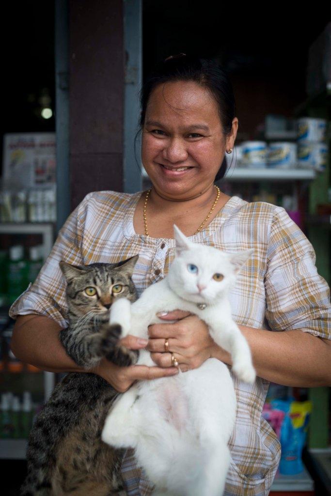 The Shopkeeper's Cats - Koh Tao, Thailand